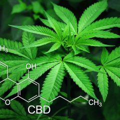 The Ultimate Guide to CBGa: Mother of All Cannabinoids