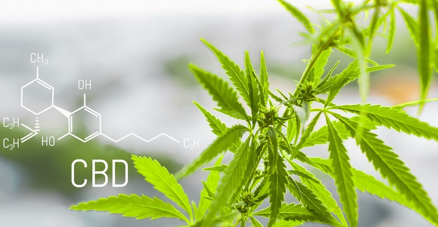 Delta 8 CBD Review: Is This Delta 8 CBD Oil & Gummies Legit?